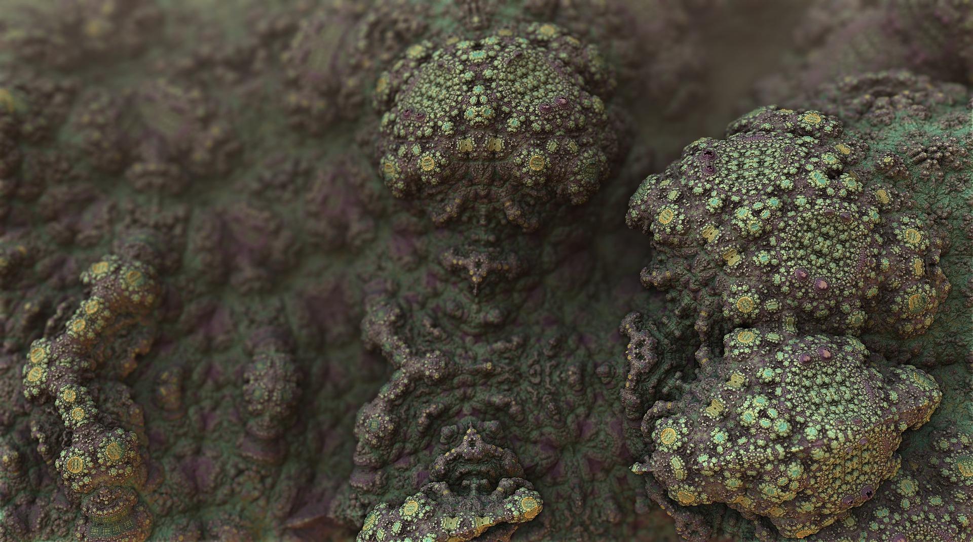 mold risk